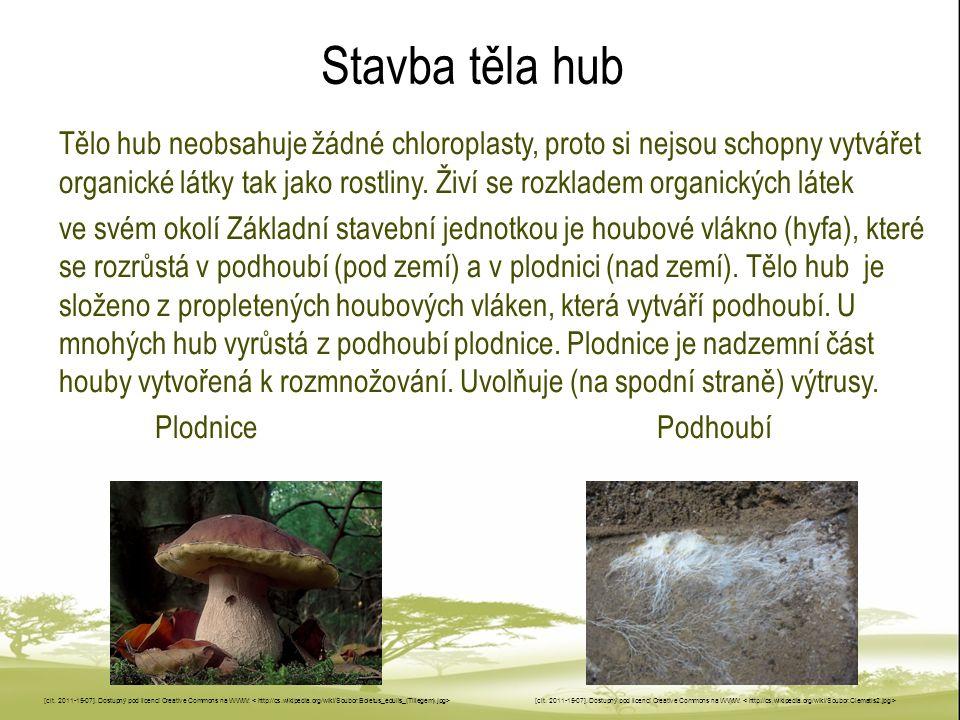 Stavba těla hub Tělo hub neobsahuje žádné chloroplasty, proto si nejsou schopny vytvářet organické látky tak jako rostliny. Živí se rozkladem organick