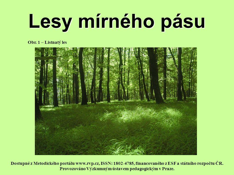 Životní podmínky lesů mírného pásu a jejich rozdělení Mírný podnebný pás –dostatek srážek, –teploty kolísají v závislosti na ročních obdobích.