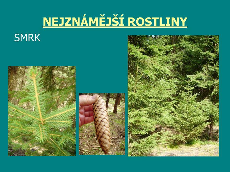 BOROVICE LESNÍ - SOSNA jehlice - ostře špičaté, ploché, vyrůstají z jednoho místa po dvou šišky - malé, vejčité, nerozpadavé kořeny - hluboké, strom je stabilnější, lépe odolává vichřici kůra - povrch kmene = borka, odlupuje se ve vrstvách horní část kmene světle rezavá dřevo - má dřevo tvrdší oproti smrku, pružné, lehké, pryskyřnaté, výrazné letokruhy, výroba pražců, výdřeva v dolech, stavba lodí, palivo Přizpůsobivý strom, odolává rozličným přírodním podmínkám.