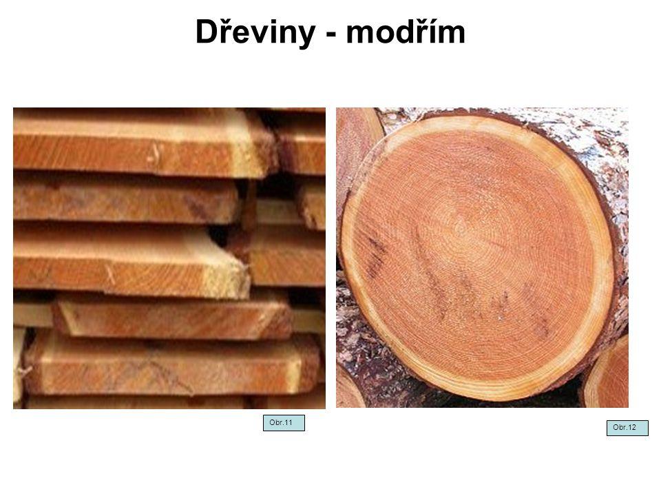 Dřeviny - borovice Obr.13Obr.14