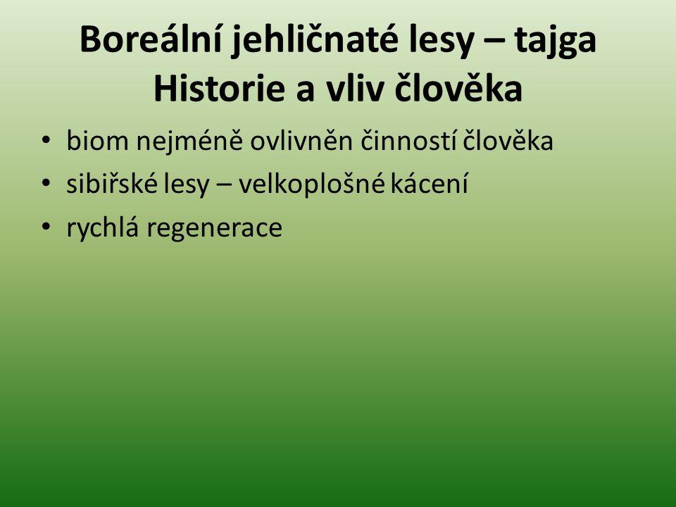 Boreální jehličnaté lesy – tajga Historie a vliv člověka biom nejméně ovlivněn činností člověka sibiřské lesy – velkoplošné kácení rychlá regenerace