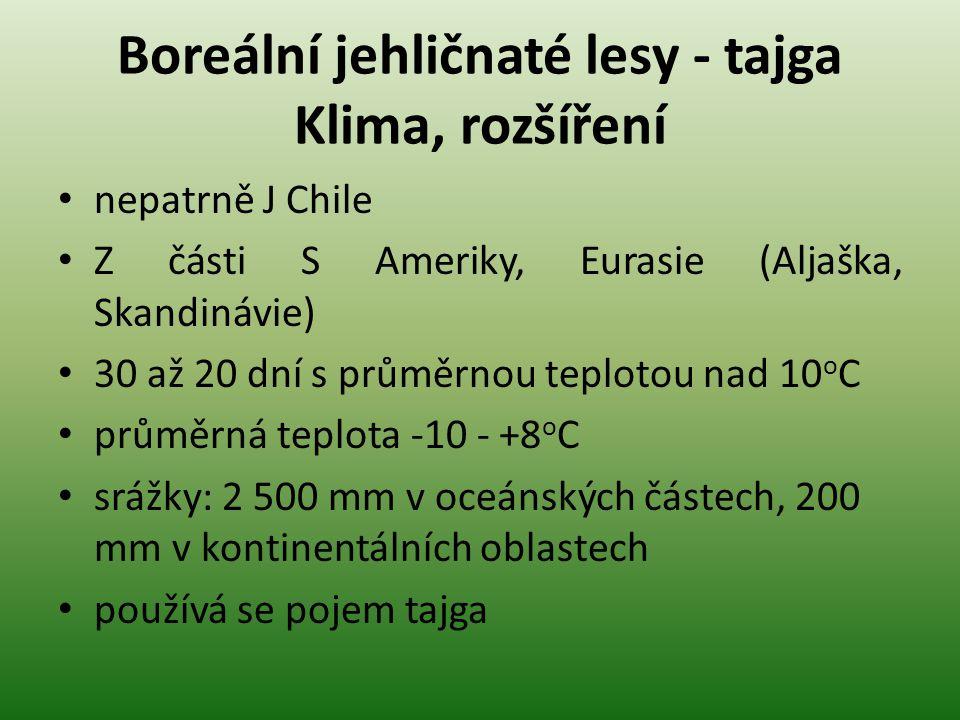 Boreální jehličnaté lesy – tajga Jednotlivé oblasti Eurasie dva dominantní druhy: SM ztepilý, BO lesní na Sibiři MD (světlá modřínová tajga), BO (světlá borovicová tajga), SM (tmavá smrková tajga) Severní Amerika větší druhové bohatství než v Evropě více druhů BO, JD, SM
