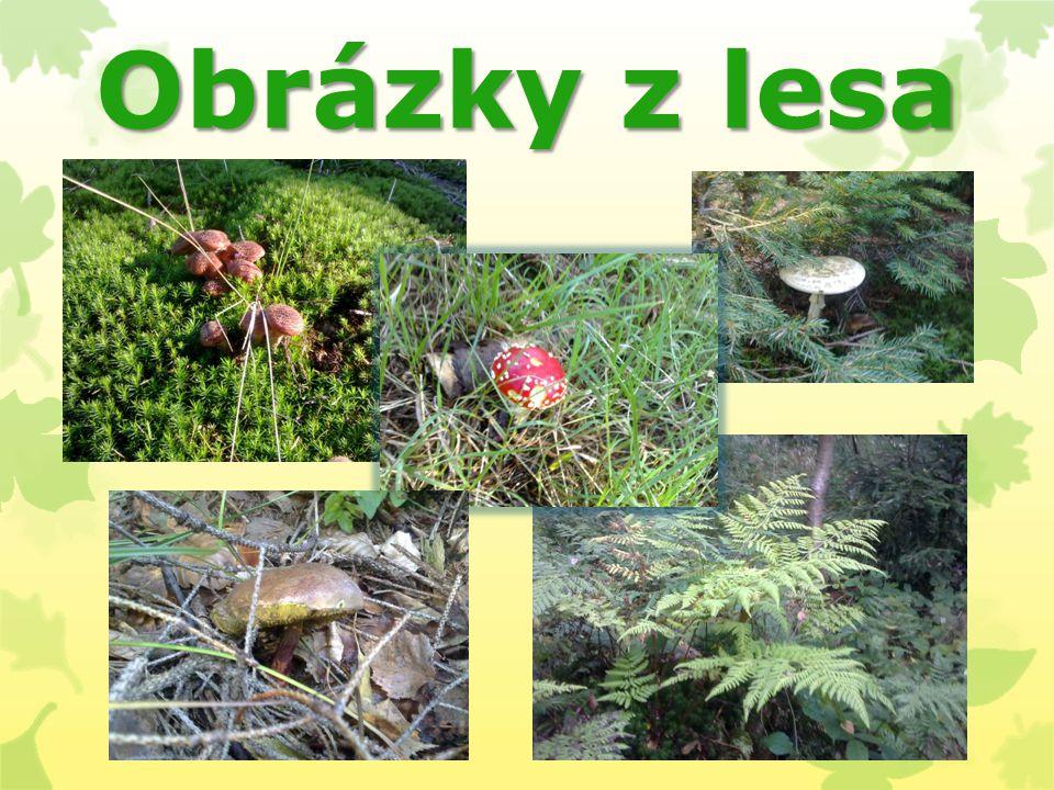 Obrázky z lesa