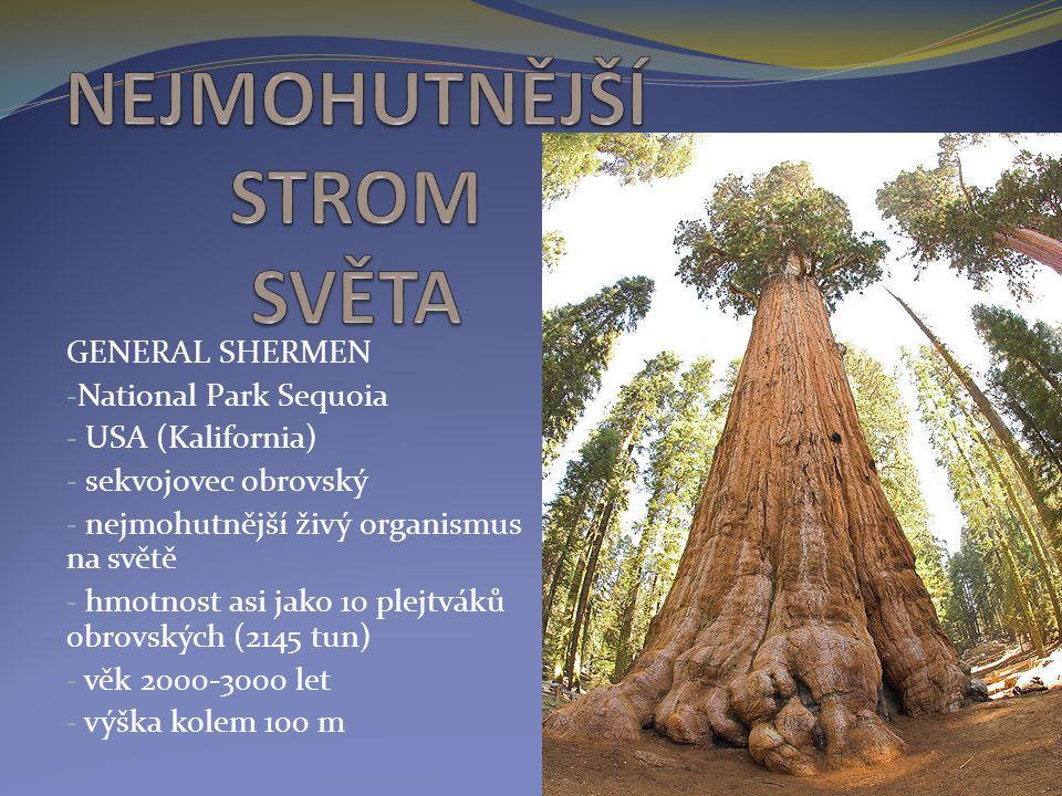 GENERAL SHERMEN - National Park Sequoia - USA (Kalifornia) - sekvojovec obrovský - nejmohutnější živý organismus na světě - hmotnost asi jako 10 plejt