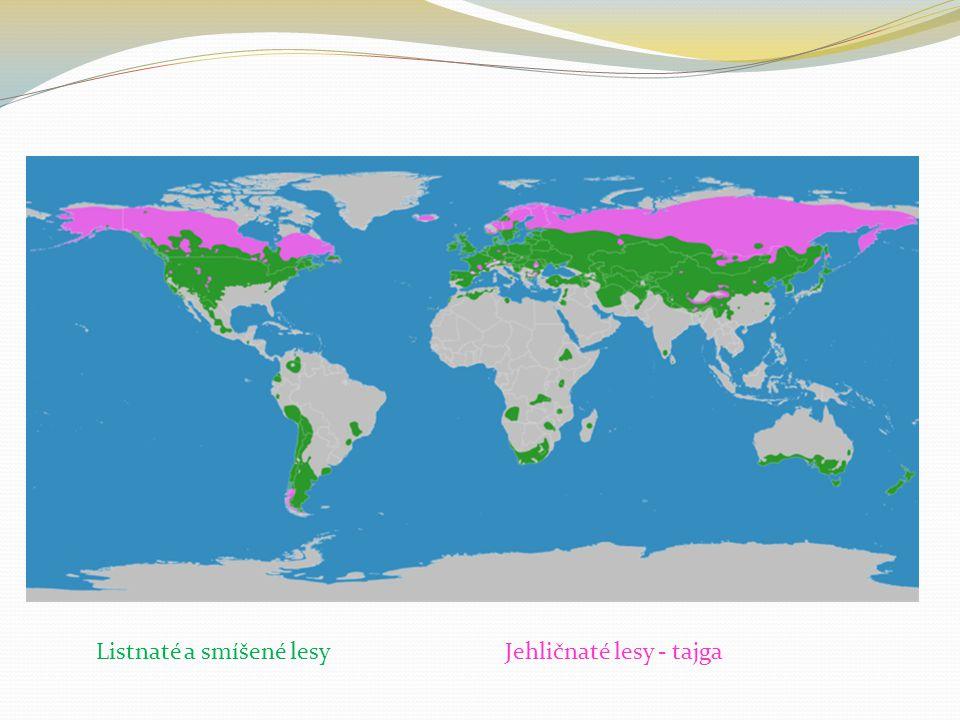 Jehličnaté lesy Jehličnaté lesy pokrývají zejména chladnější oblasti.
