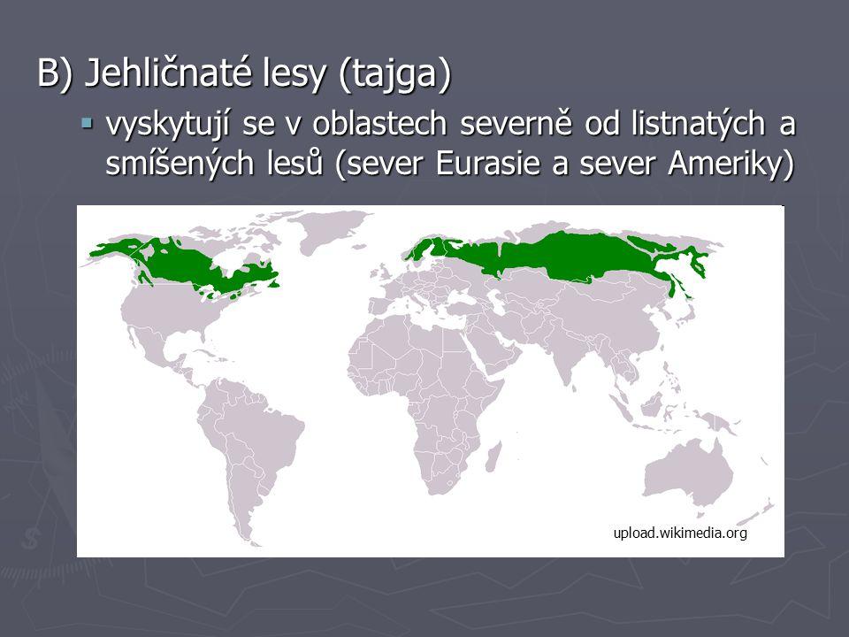 B) Jehličnaté lesy (tajga)  vyskytují se v oblastech severně od listnatých a smíšených lesů (sever Eurasie a sever Ameriky) upload.wikimedia.org