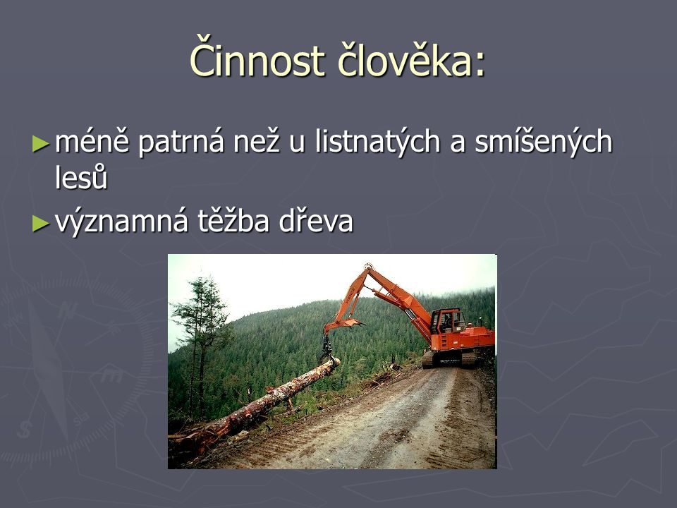 Činnost člověka: ► méně patrná než u listnatých a smíšených lesů ► významná těžba dřeva