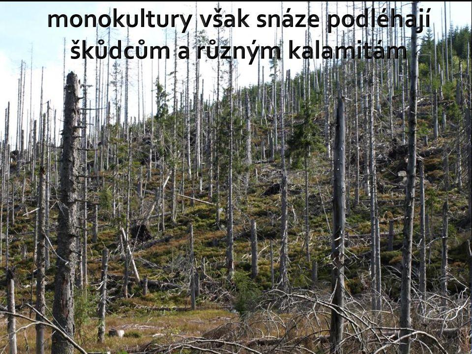 skladba lesů neodpovídá výškovému stupni – převládají smrkové a borové monokultury - smrky a borovice rychle rostou a dřevo lze využít v průmyslu