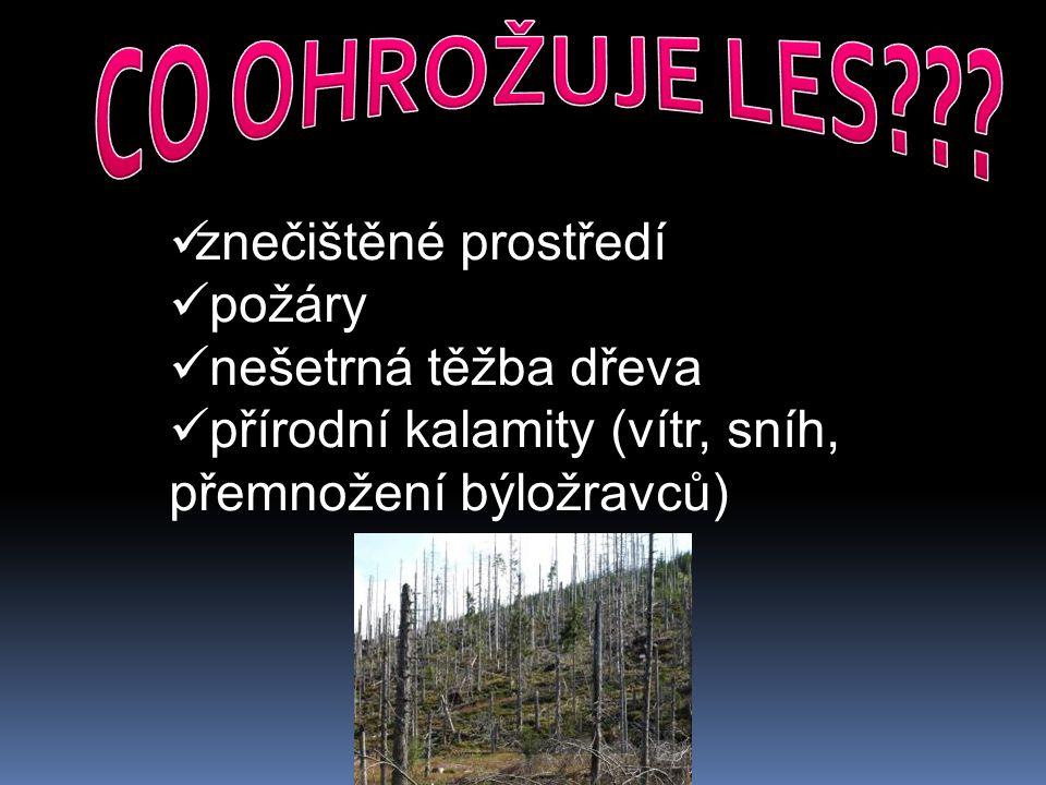 znečištěné prostředí požáry nešetrná těžba dřeva přírodní kalamity (vítr, sníh, přemnožení býložravců)