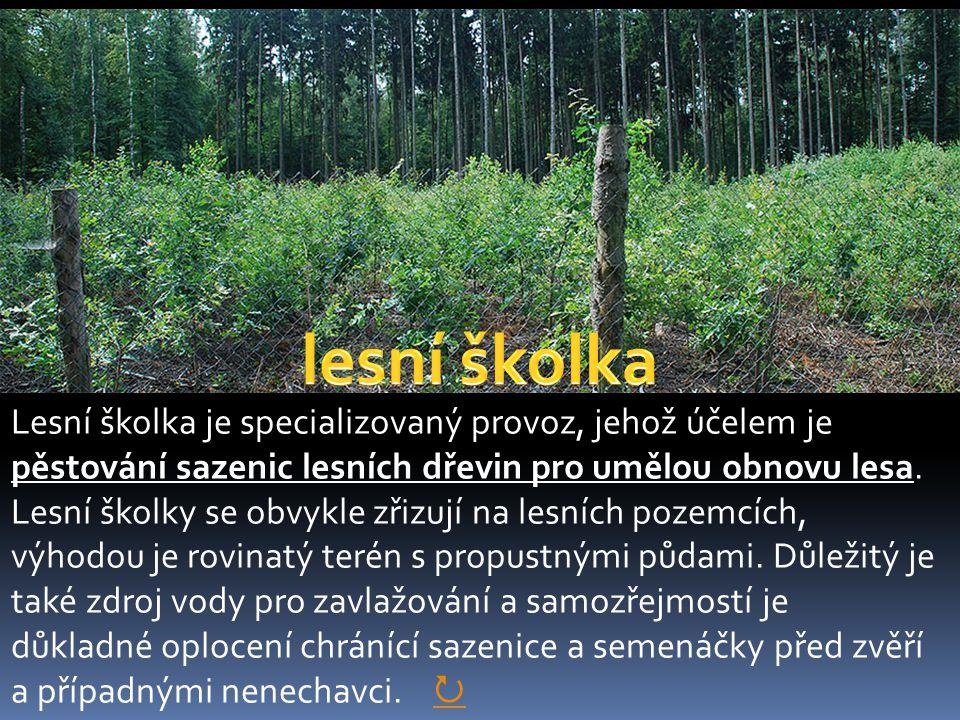 Lesní školka je specializovaný provoz, jehož účelem je pěstování sazenic lesních dřevin pro umělou obnovu lesa.