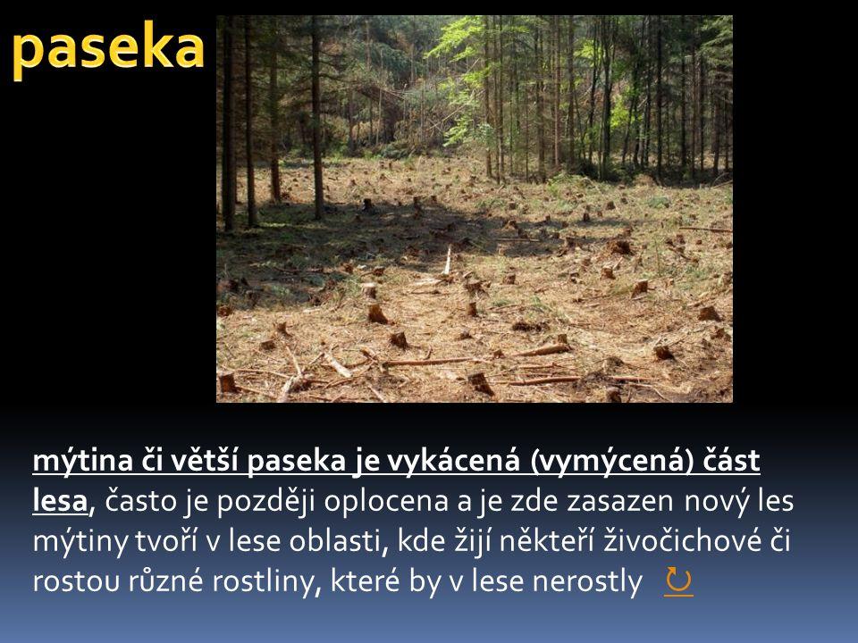 mýtina či větší paseka je vykácená (vymýcená) část lesa, často je později oplocena a je zde zasazen nový les mýtiny tvoří v lese oblasti, kde žijí někteří živočichové či rostou různé rostliny, které by v lese nerostly  