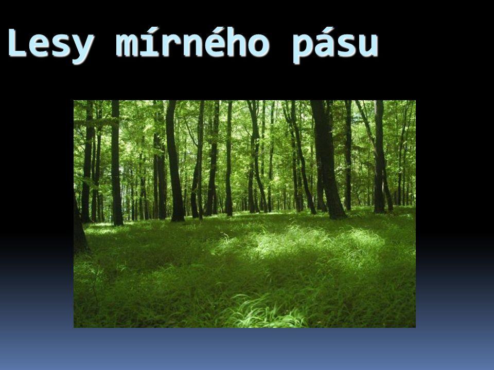 Životní podmínky lesů mírného pásu a jejich rozdělení  Mírný podnebný pás  dostatek srážek,  teploty kolísají v závislosti na ročních obdobích.