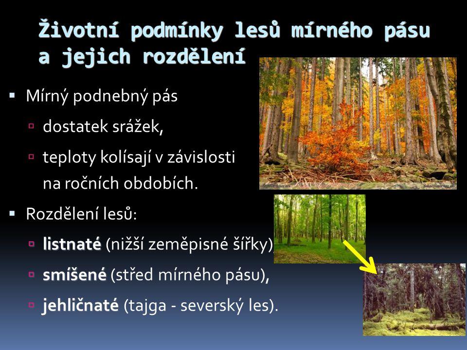 Životní podmínky lesů mírného pásu a jejich rozdělení  Mírný podnebný pás  dostatek srážek,  teploty kolísají v závislosti na ročních obdobích.  R