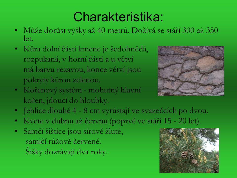 Charakteristika: Může dorůst výšky až 40 metrů. Dožívá se stáří 300 až 350 let. Kůra dolní části kmene je šedohnědá, rozpukaná, v horní části a u větv