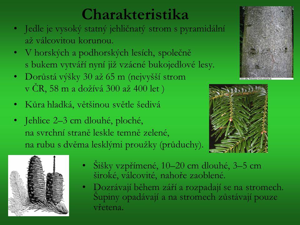 Charakteristika Jedle je vysoký statný jehličnatý strom s pyramidální až válcovitou korunou. V horských a podhorských lesích, společně s bukem vytváří