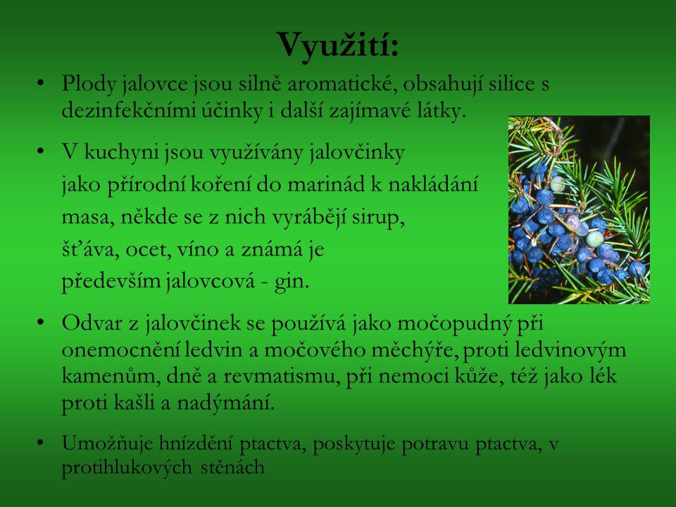 Využití: Plody jalovce jsou silně aromatické, obsahují silice s dezinfekčními účinky i další zajímavé látky. V kuchyni jsou využívány jalovčinky jako