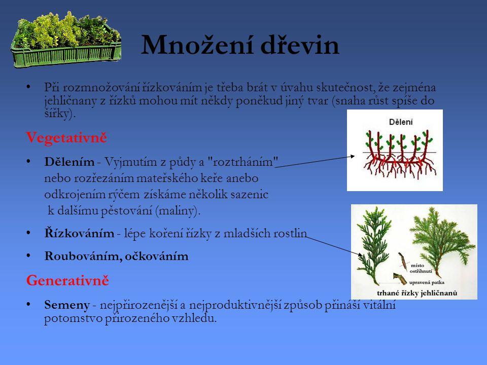 Množení dřevin Při rozmnožování řízkováním je třeba brát v úvahu skutečnost, že zejména jehličnany z řízků mohou mít někdy poněkud jiný tvar (snaha rů