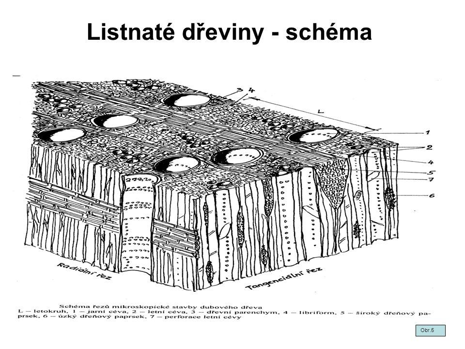 Listnaté dřeviny - schéma Obr.5