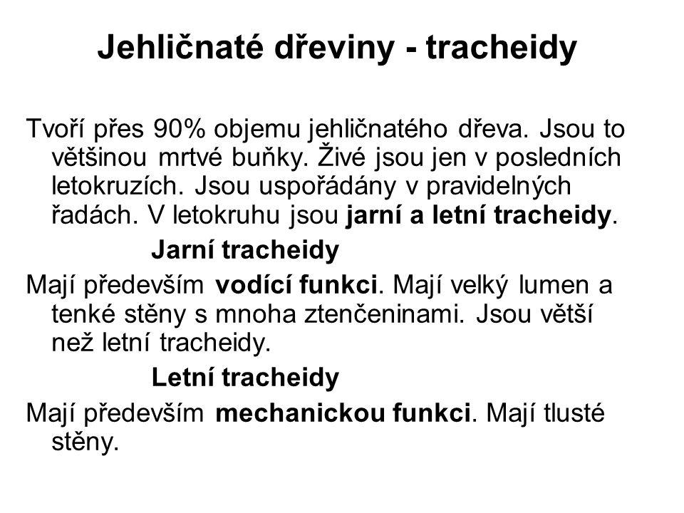 Jehličnaté dřeviny - tracheidy Jarní tracheidy Letní tracheidy Obr.1
