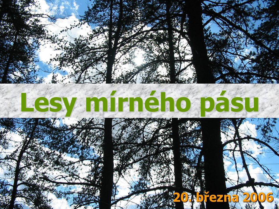 Lesy mírného pásu 20. března 2006