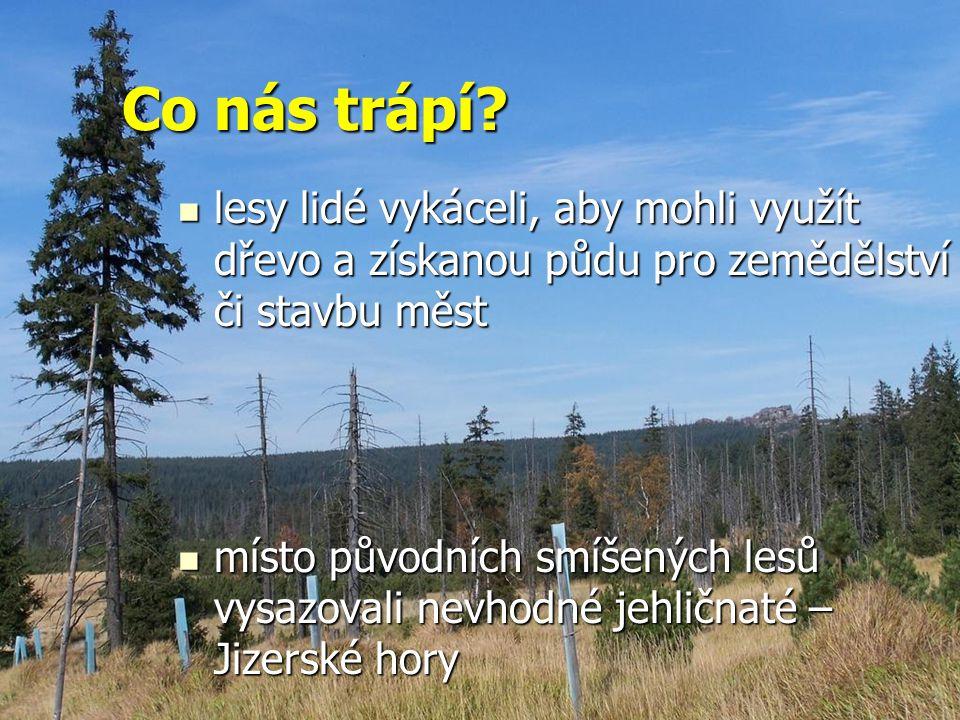 Co nás trápí? lesy lidé vykáceli, aby mohli využít dřevo a získanou půdu pro zemědělství či stavbu měst lesy lidé vykáceli, aby mohli využít dřevo a z