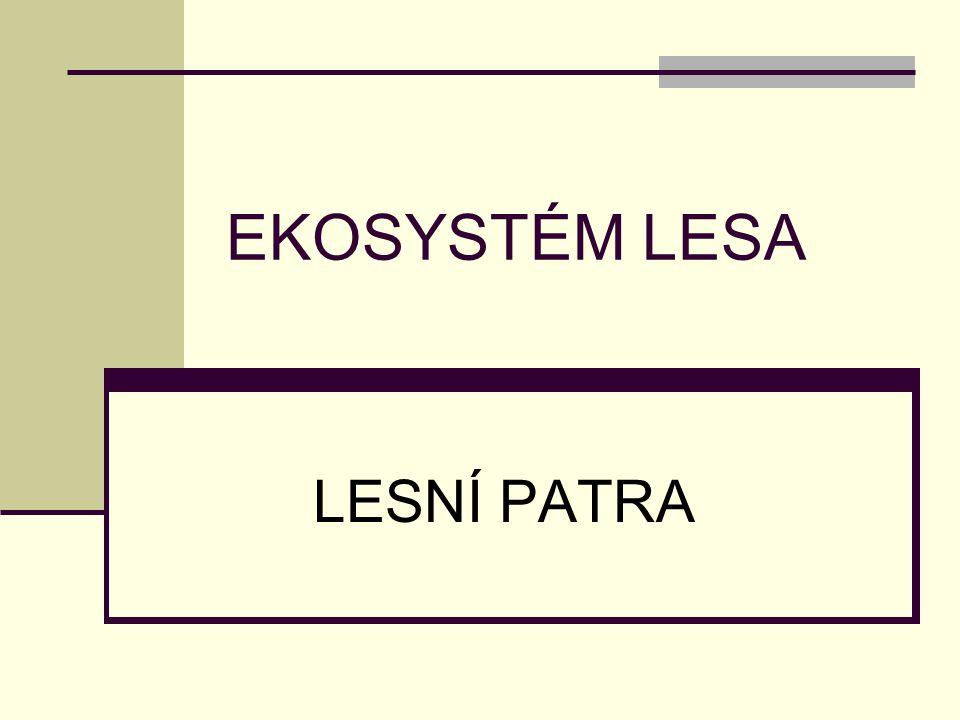 EKOSYSTÉM LESA LESNÍ PATRA