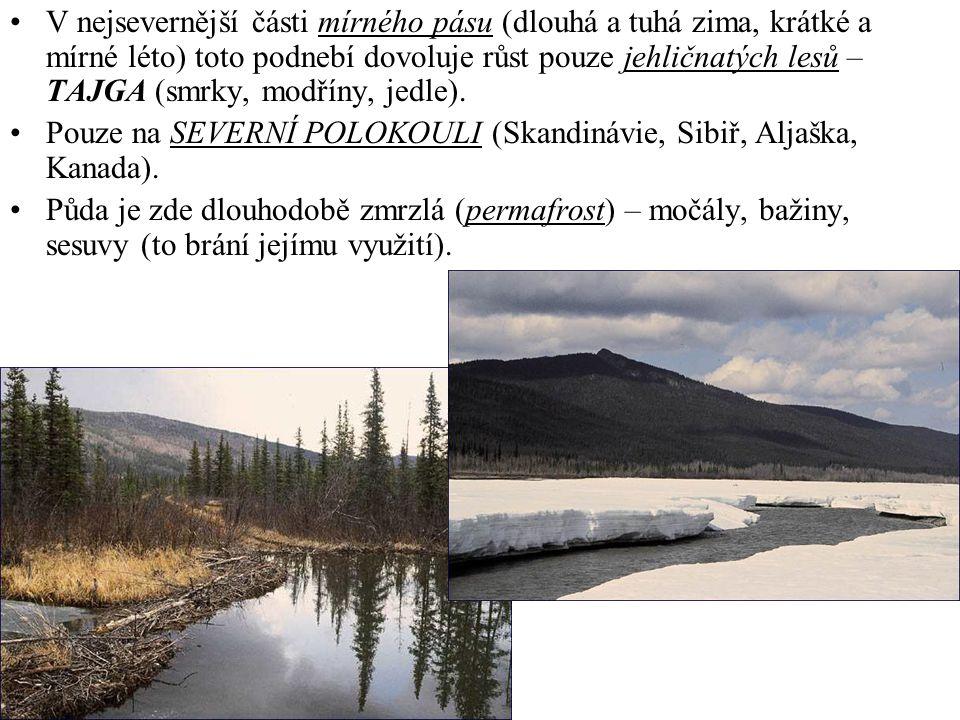 V nejsevernější části mírného pásu (dlouhá a tuhá zima, krátké a mírné léto) toto podnebí dovoluje růst pouze jehličnatých lesů – TAJGA (smrky, modřín