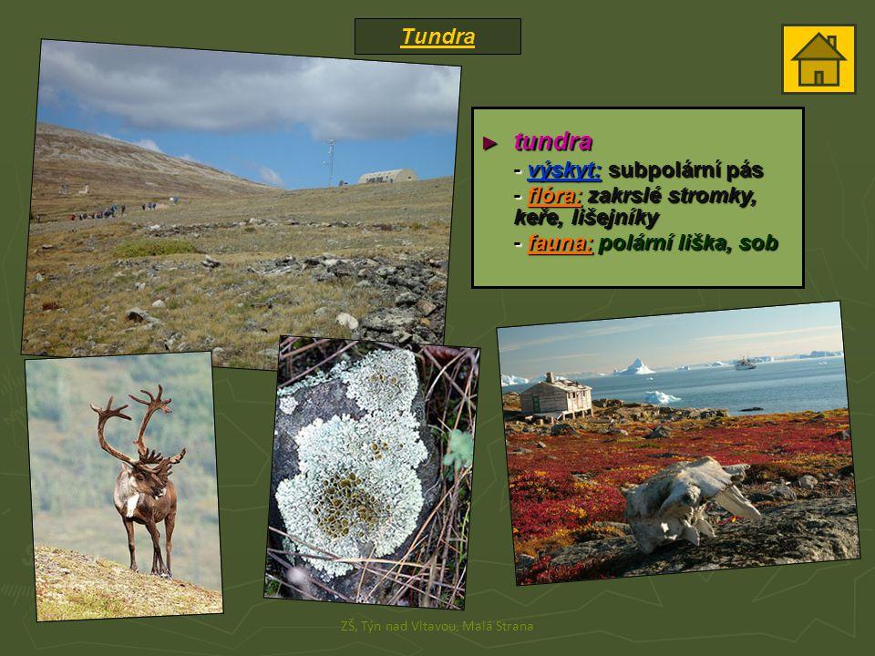 Tundra ZŠ, Týn nad Vltavou, Malá Strana ► tundra - výskyt: subpolární pás - flóra: zakrslé stromky, keře, lišejníky - fauna: polární liška, sob