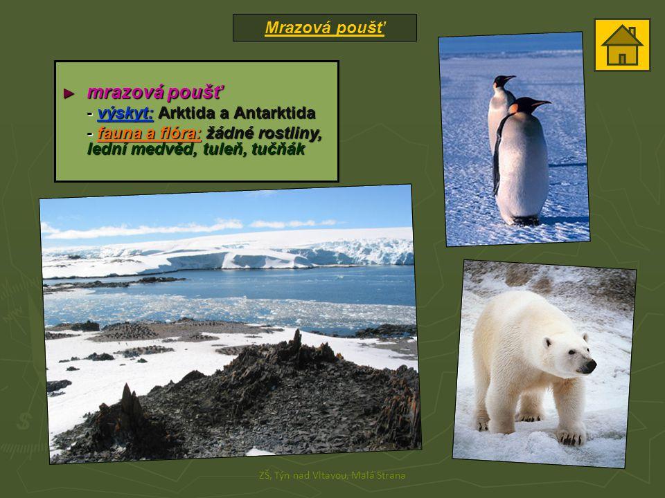 Mrazová poušť ZŠ, Týn nad Vltavou, Malá Strana ► mrazová poušť - výskyt: Arktida a Antarktida - fauna a flóra: žádné rostliny, lední medvěd, tuleň, tu