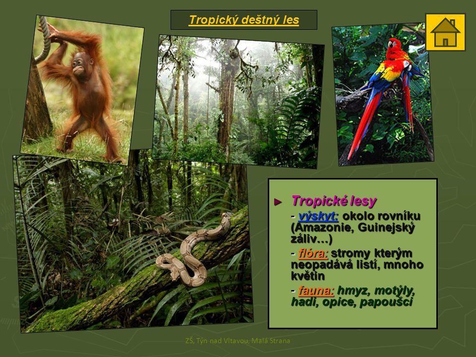 Tropický deštný les ZŠ, Týn nad Vltavou, Malá Strana ► Tropické lesy - výskyt: okolo rovníku (Amazonie, Guinejský záliv…) - flóra: stromy kterým neopadává listí, mnoho květin - fauna: hmyz, motýly, hadi, opice, papoušci