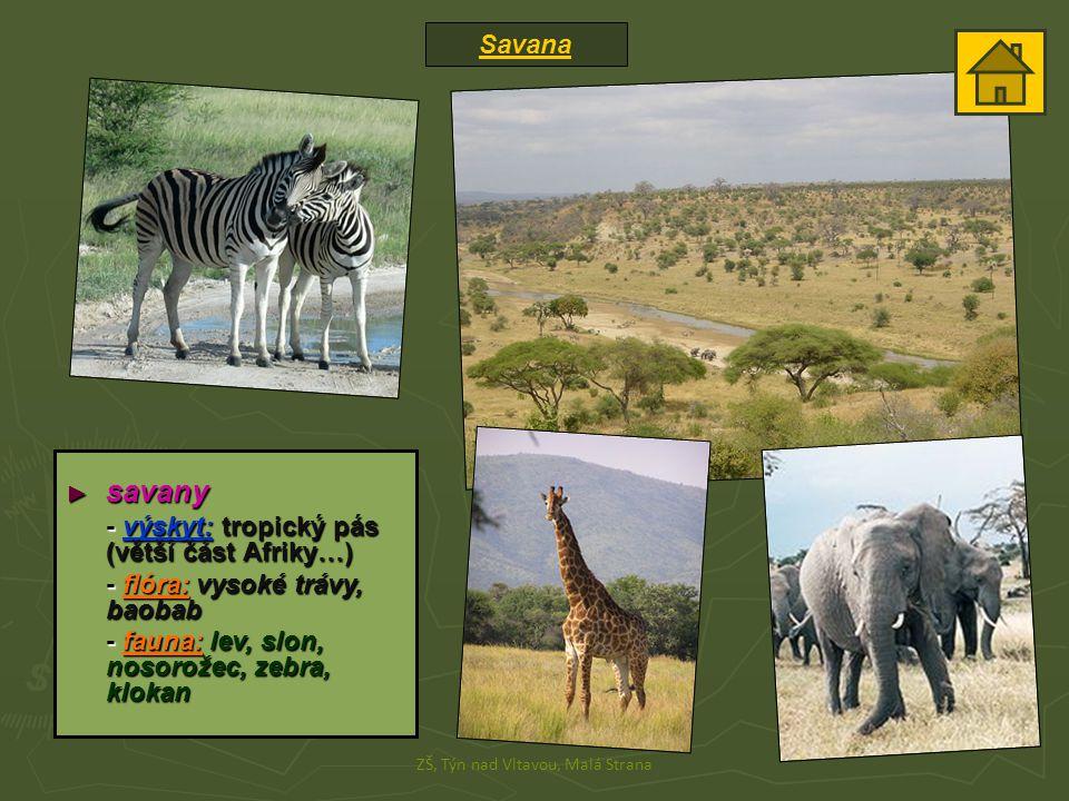 Savana ZŠ, Týn nad Vltavou, Malá Strana ► savany - výskyt: tropický pás (větší část Afriky…) - flóra: vysoké trávy, baobab - fauna: lev, slon, nosorožec, zebra, klokan