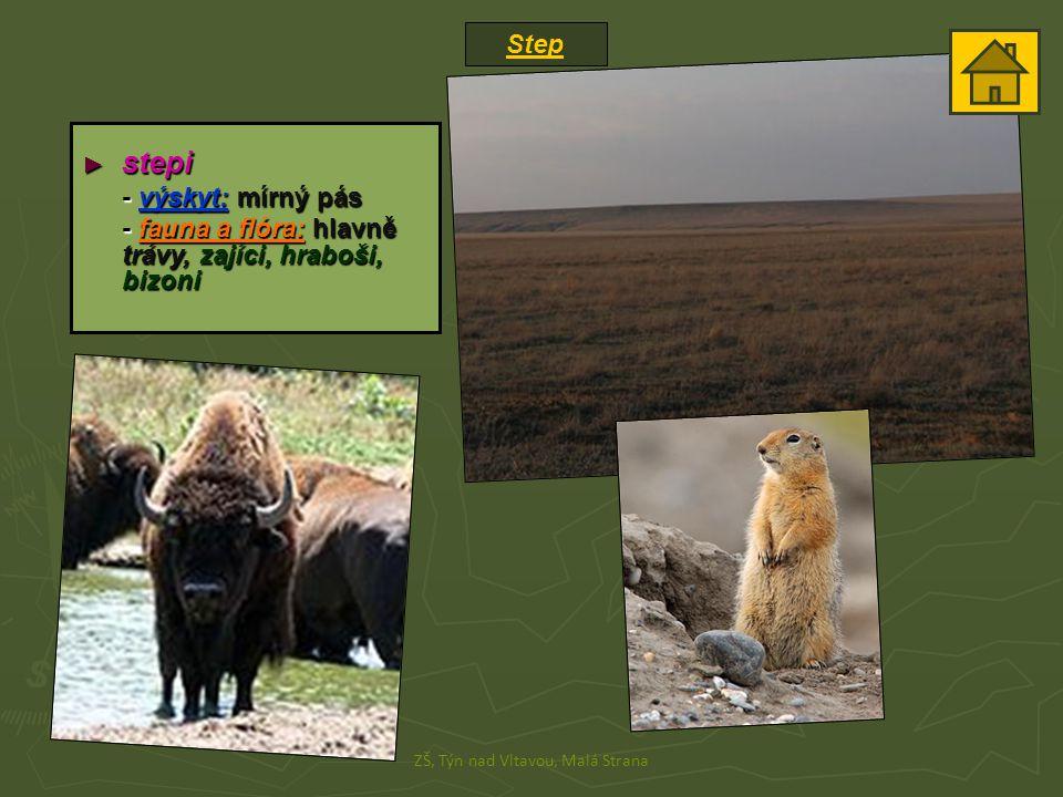 Step ZŠ, Týn nad Vltavou, Malá Strana ► stepi - výskyt: mírný pás - fauna a flóra: hlavně trávy, zajíci, hraboši, bizoni