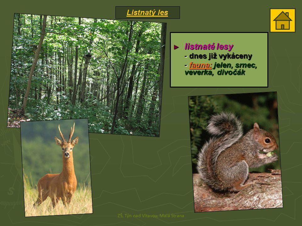 Listnatý les ZŠ, Týn nad Vltavou, Malá Strana ► listnaté lesy - dnes již vykáceny - fauna: jelen, srnec, veverka, divočák