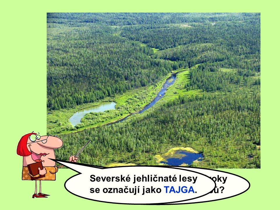 V čem se liší ekologické nároky jehličnatých a listnatých lesů.