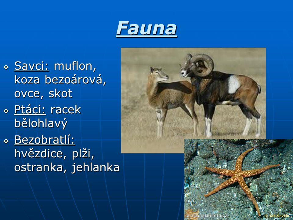 Fauna  Savci: muflon, koza bezoárová, ovce, skot  Ptáci: racek bělohlavý  Bezobratlí: hvězdice, plži, ostranka, jehlanka