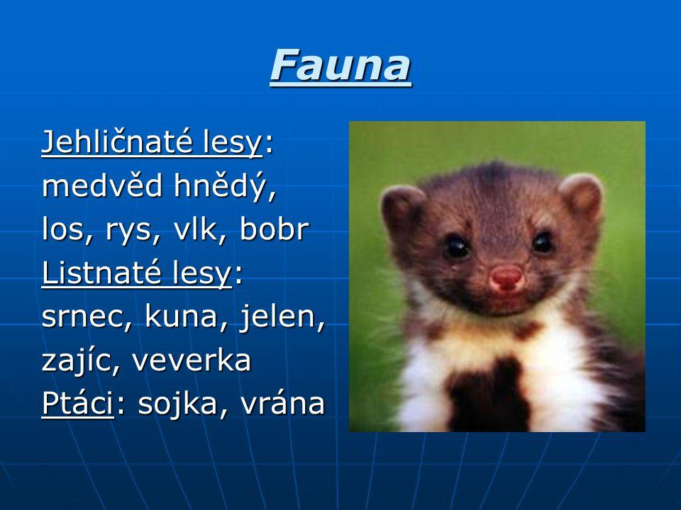 Fauna Jehličnaté lesy: medvěd hnědý, los, rys, vlk, bobr Listnaté lesy: srnec, kuna, jelen, zajíc, veverka Ptáci: sojka, vrána