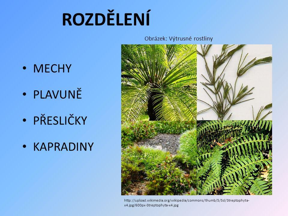 ROZDĚLENÍ MECHY PLAVUNĚ PŘESLIČKY KAPRADINY Obrázek: Výtrusné rostliny http://upload.wikimedia.org/wikipedia/commons/thumb/5/5d/Streptophyta- x4.jpg/6