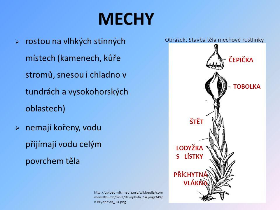  z VÝTRUSŮ (vypadne z tobolky na zem) vyklíčí PRVOKLÍČEK, ze kterého vyroste MECHOVÁ ROSTLINKA s pohlavními orgány (v kapce vody dojde k OPLOZENÍ);  z oplozené samičí buňky vyroste štět s tobolkou; v tobolce zrají výtrusy, které se po dozrání uvolňují a ve vhodném prostředí z nich klíčí prvoklíček ROZMNOŽOVÁNÍ MECHŮ
