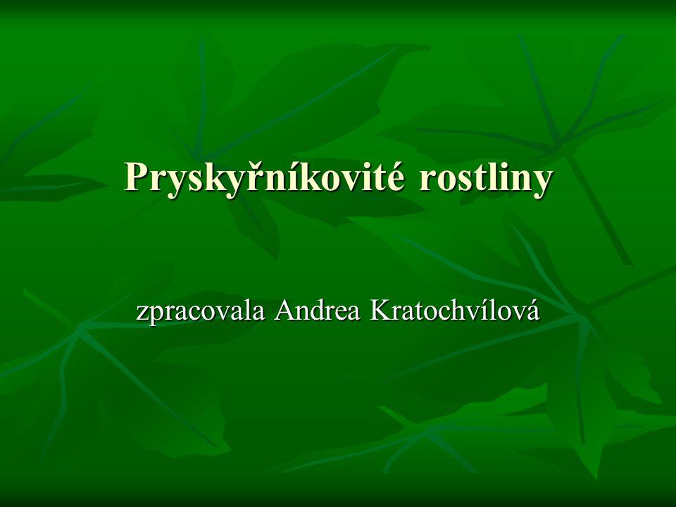 Pryskyřníkovité rostliny zpracovala Andrea Kratochvílová