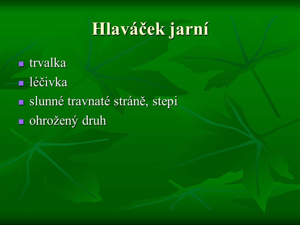 Hlaváček jarní trvalka trvalka léčivka léčivka slunné travnaté stráně, stepi slunné travnaté stráně, stepi ohrožený druh ohrožený druh