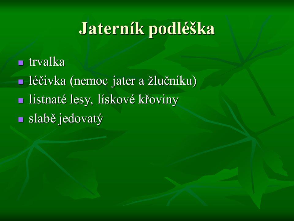 Jaterník podléška trvalka trvalka léčivka (nemoc jater a žlučníku) léčivka (nemoc jater a žlučníku) listnaté lesy, lískové křoviny listnaté lesy, lísk