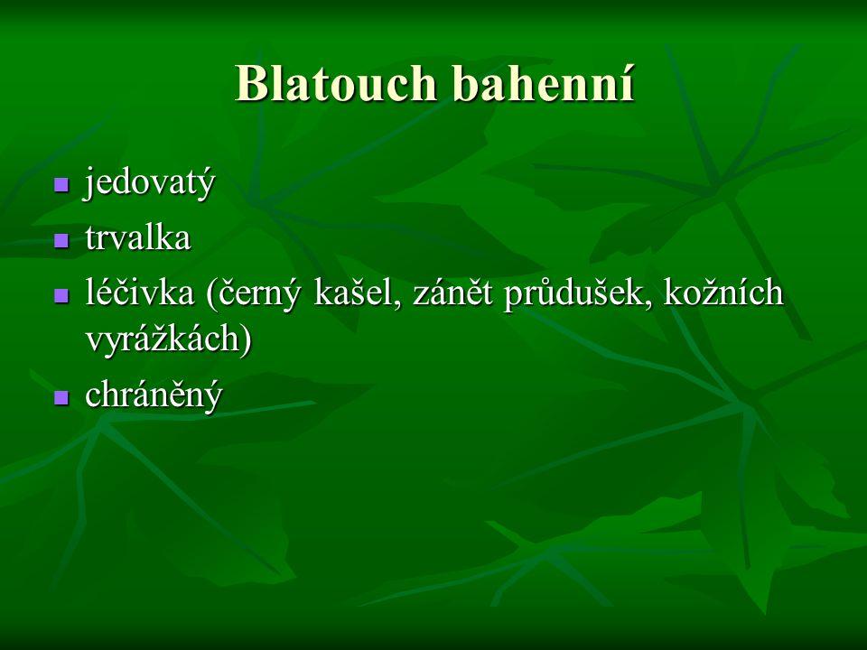 Blatouch bahenní jedovatý jedovatý trvalka trvalka léčivka (černý kašel, zánět průdušek, kožních vyrážkách) léčivka (černý kašel, zánět průdušek, kožn