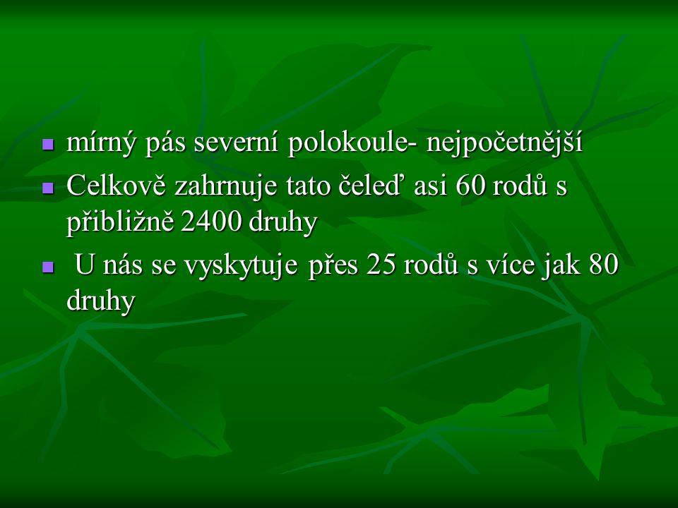 Rody Hlaváček (Adonis) Hlaváček (Adonis) Hlaváček Jaterník (Hepatica) Jaterník (Hepatica) Jaterník Koniklec (Pulsatilla) Koniklec (Pulsatilla) Koniklec Lakušník (Batrachium) Lakušník (Batrachium) Lakušník Orsej (Ficaria) Orsej (Ficaria) Orsej Plamének (Clematis) Plamének (Clematis) Plamének Pryskyřník (Ranunculus) Pryskyřník (Ranunculus) Pryskyřník Sasanka (Anemonoides) Sasanka (Anemonoides) Sasanka Čemeřice (Helleborus) Čemeřice (Helleborus) Čemeřice Žluťucha (Thalictrum) Žluťucha (Thalictrum) Žluťucha Oměj (Aconitum) Oměj (Aconitum) Blatouch (Caltha) Blatouch (Caltha)