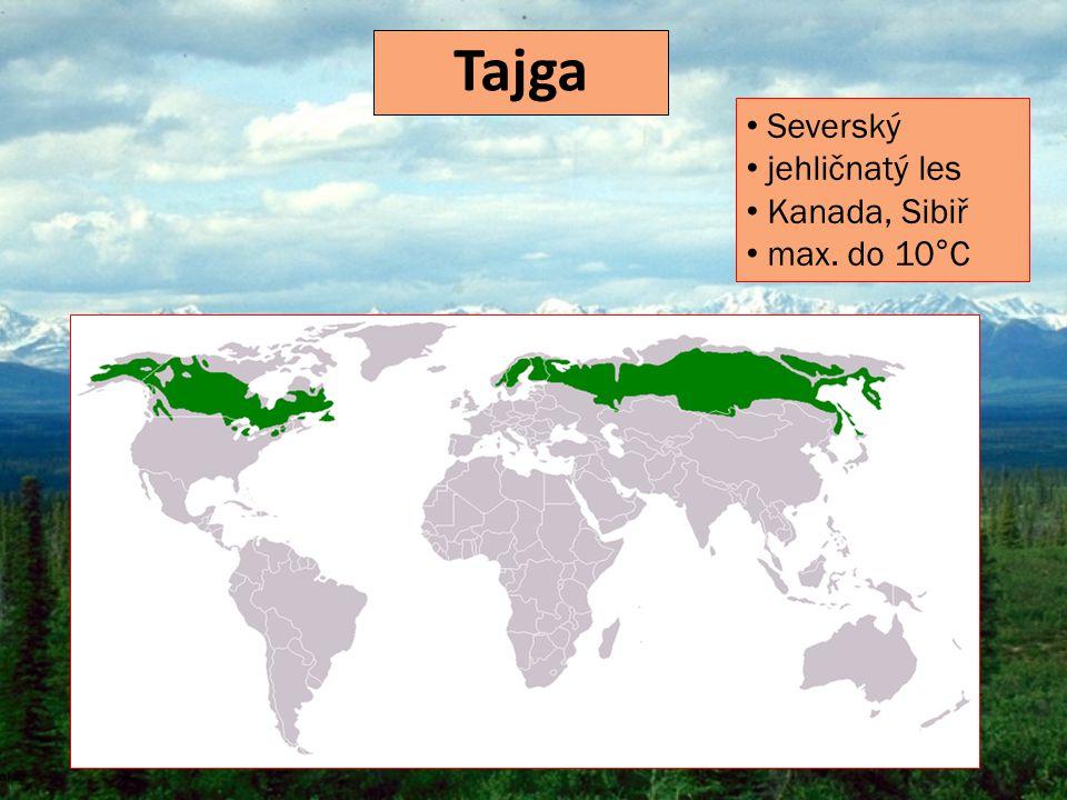 Tajga Severský jehličnatý les Kanada, Sibiř max. do 10°C