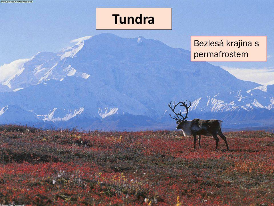 Tundra Bezlesá krajina s permafrostem