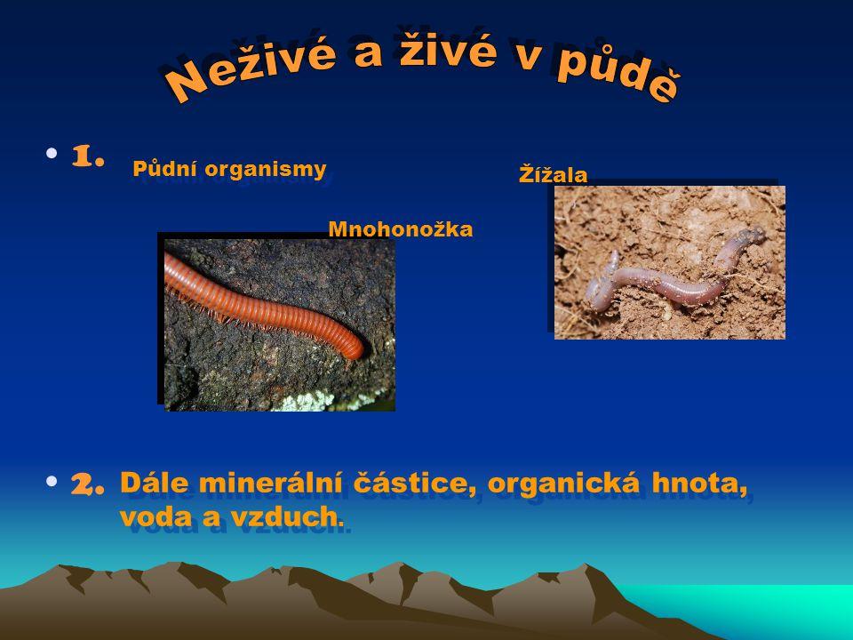 1. 2. Mnohonožka Žížala Půdní organismy Dále minerální částice, organická hnota, voda a vzduch.