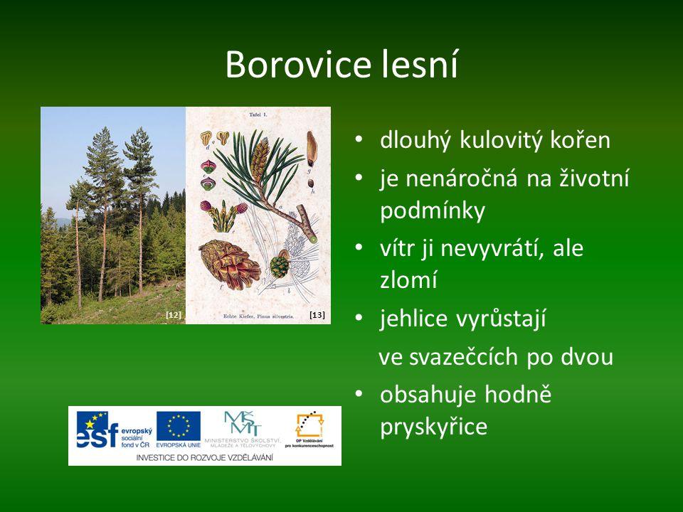 Borovice lesní dlouhý kulovitý kořen je nenáročná na životní podmínky vítr ji nevyvrátí, ale zlomí jehlice vyrůstají ve svazečcích po dvou obsahuje ho