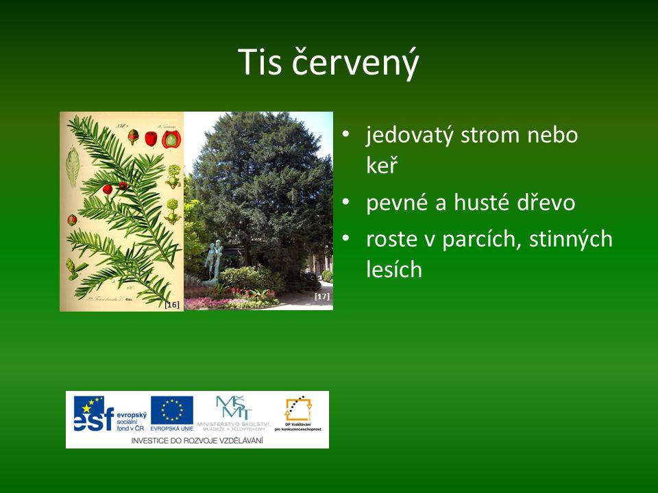 Tis červený jedovatý strom nebo keř pevné a husté dřevo roste v parcích, stinných lesích [16] [17]