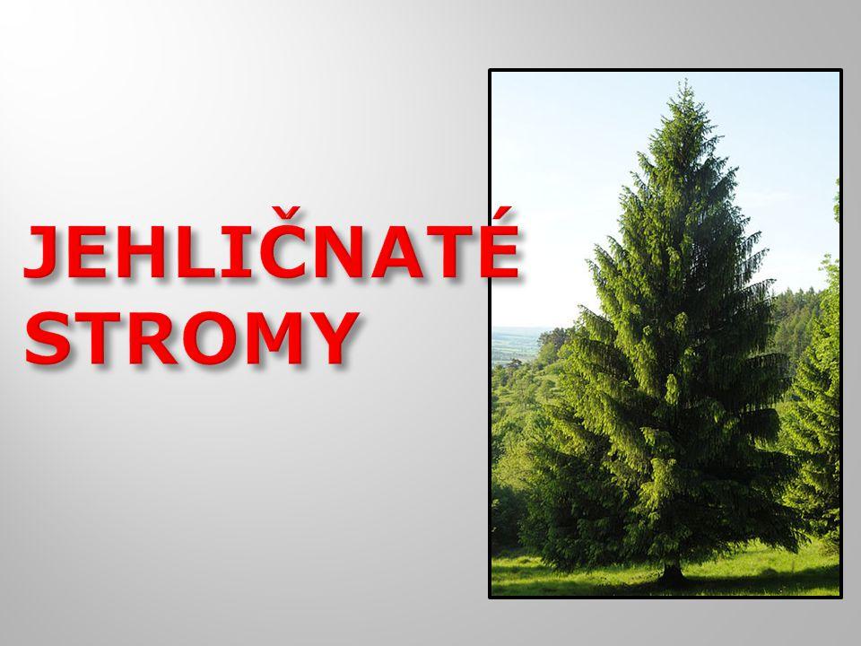  Pohádka o vánočním stromu