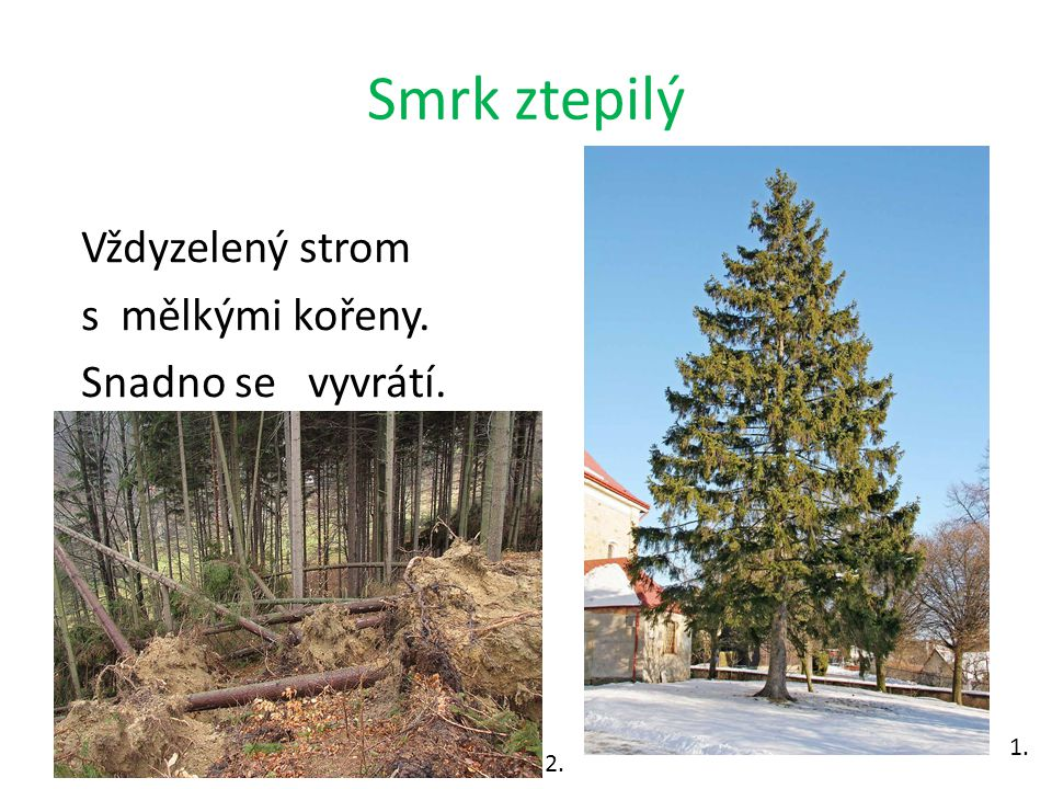 Smrčina Smrčina je jednodruhový (monokulturní) les. 5. 6.